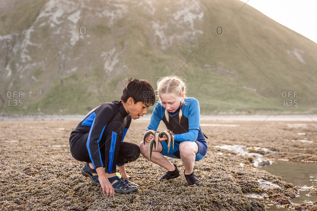 Two kids looking at a sea star found on Hawke's Bay, New Zealand