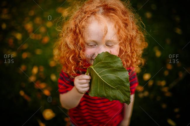 Little boy hiding smiling face behind oversized leaf
