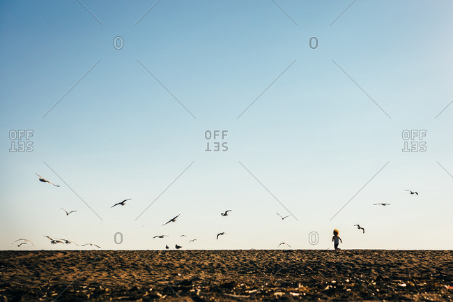 Small child chasing seagulls on sunny beach