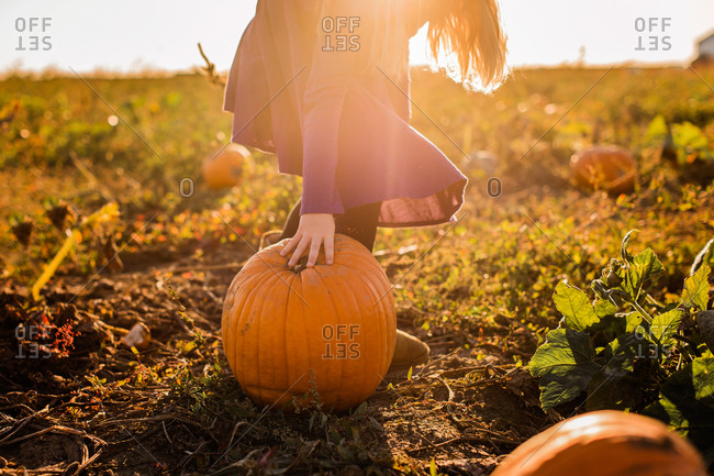 Girl reaching for pumpkin in field at sunset