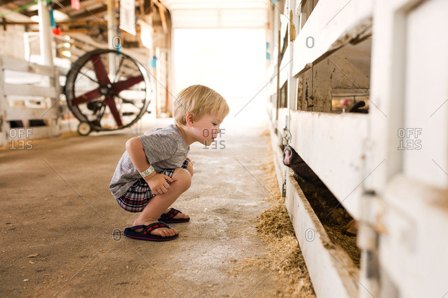 Toddler boy crouched down to look at fair booth animal