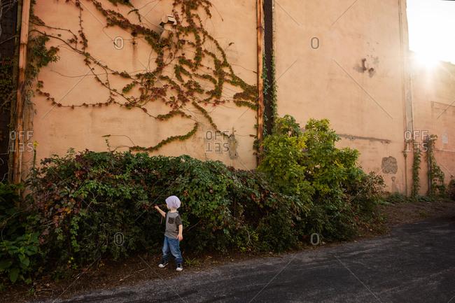 Little boy exploring urban shrubbery