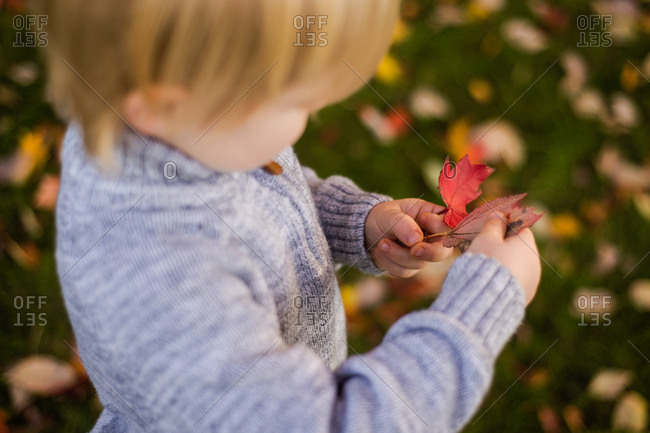 Small child looking at fallen leaf in hands