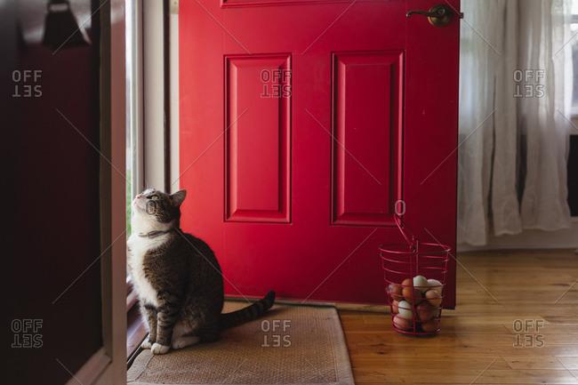 Basket of fresh eggs beside red door and cat