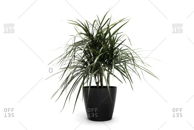 Green leafy potted plant