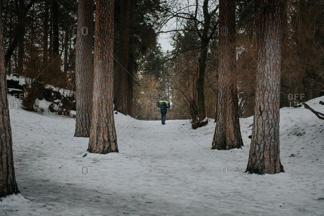 Rear view of boy carrying sled through forest