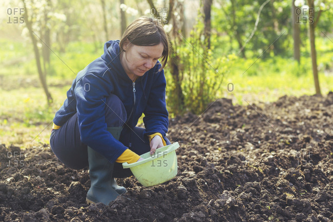 Woman sowing onions in organic vegetable garden.