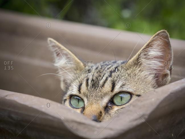 Close-up of domestic cat hiding in empty plant pot