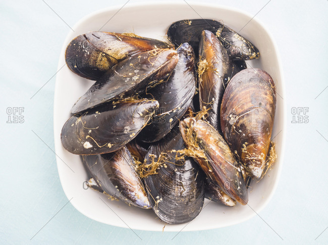 Bowl of fresh mussels