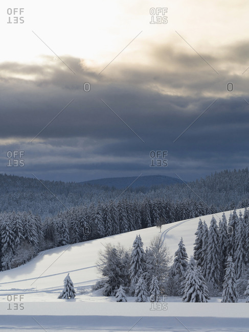 Scenic view of Ski track Thurnerspur in the Black Forest near St. Margen, Hochschwarzwald, Baden-Wurttemberg, Germany