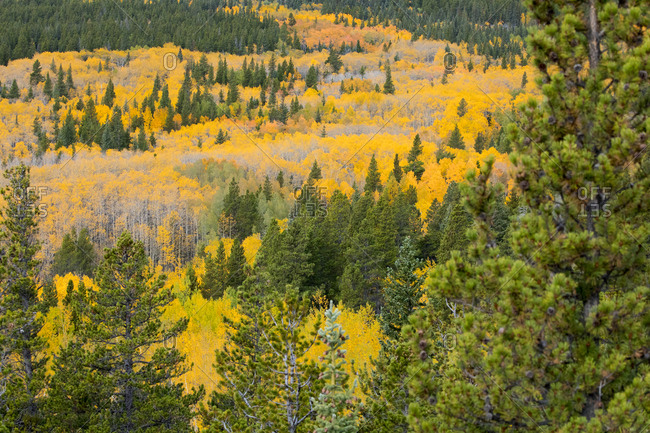 Valley of Aspens II