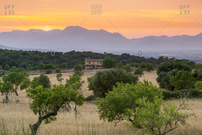 View of landscape with olive trees and mountains at dusk with farmhouse in landscape, Majorca, Balearic Islands, Spain, Mediterranean, Europe