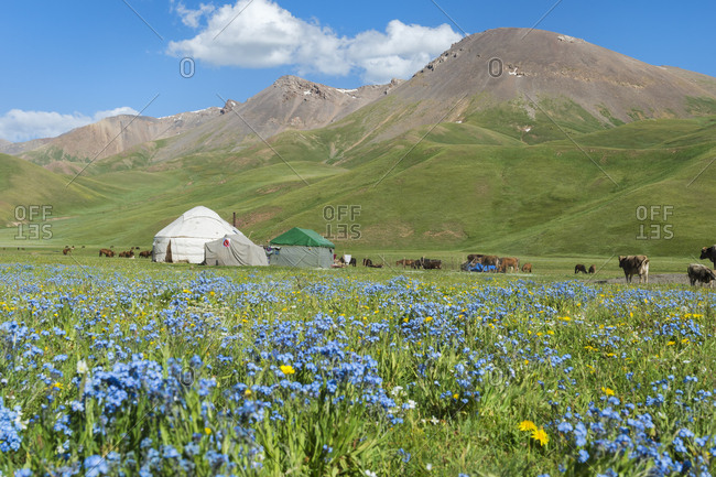 Nomad yurt camp, Song Kol Lake, Naryn province, Kyrgyzstan, Central Asia, Asia