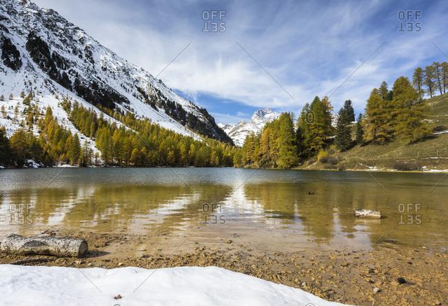 Larch trees reflected in Lai da Palpuogna (Palpuognasee), Bergun, Albula Pass, Canton of Graubunden (Grisons), Switzerland, Europe