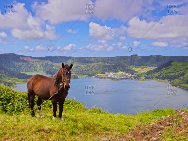 Horse with Lagoa das Sete Cidades in the background, Sao Miguel Island, Azores, Portugal, Atlantic, Europe