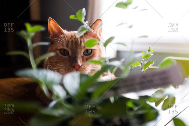 Cat looking through leaves of plant