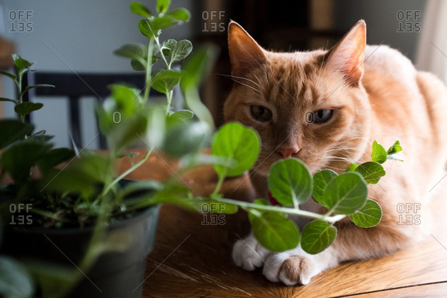 Cat looking through leaves of potted plant