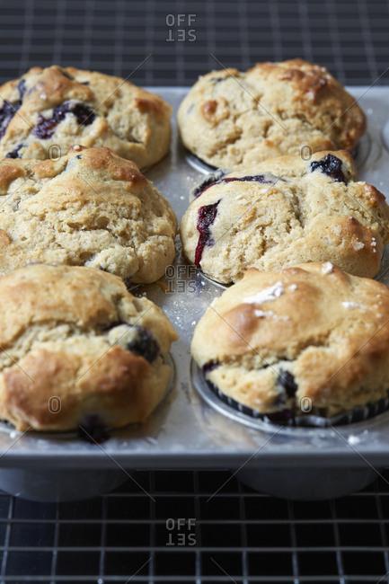 Blueberry muffins on baking sheet