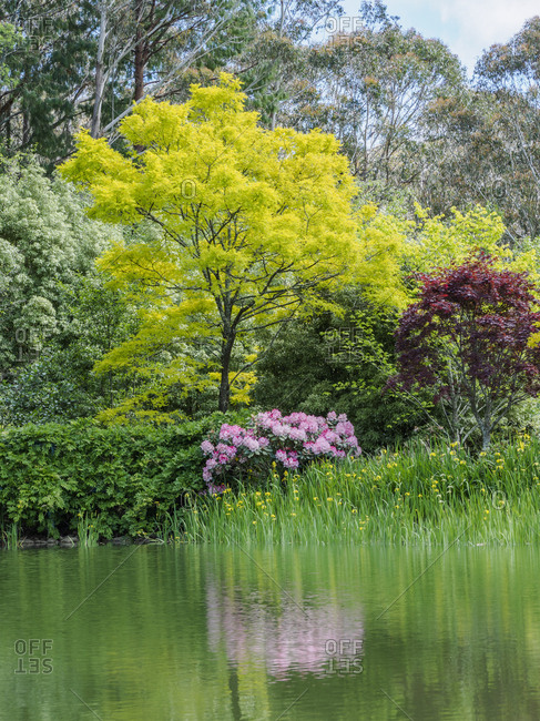 Bush with rhododendrons and trees reflected in lake