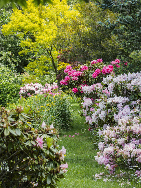 Australia, New South Wales, Katoomba, Garden with green trees and rhododendron bushes