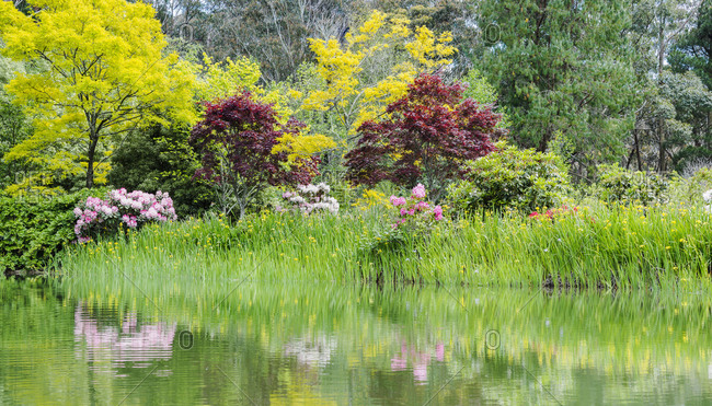 Australia, New South Wales, Katoomba, Bush with rhododendrons and trees reflected in lake