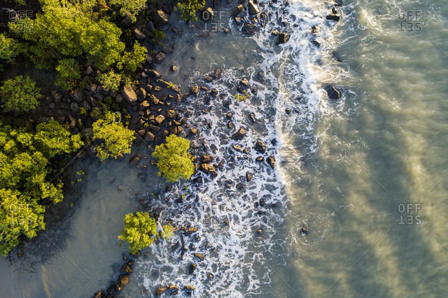 Australia, Queensland, Port Douglas, Aerial view of coastline with mangroves trees (Rhizophora)