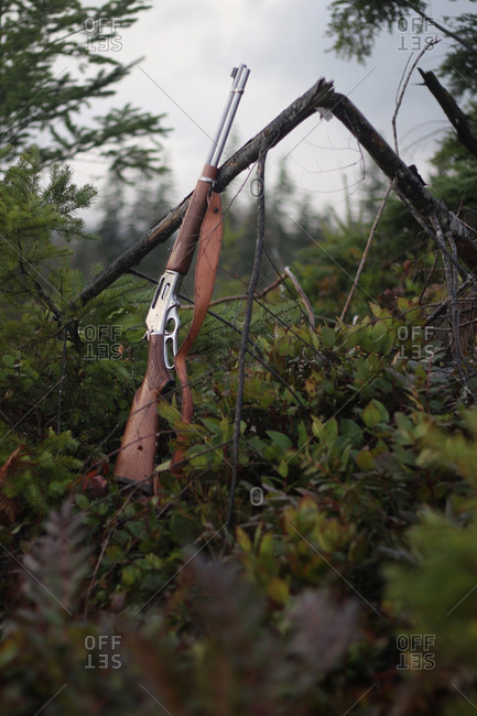 Hunting rifle leaning against tree branch