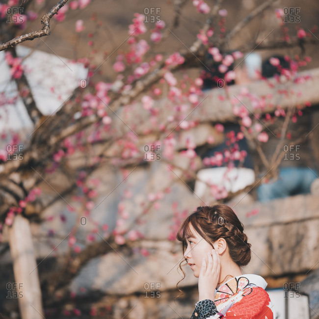Kyoto, Japan - March 12, 2018: Woman in traditional kimono fixes hair with plum blossom blooming in background