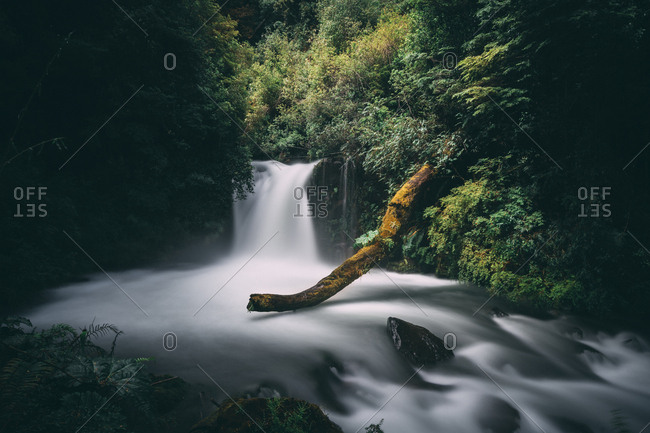 Majestic view of waterfall at forest