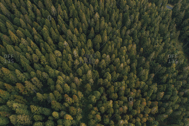 Aerial view of trees growing at Reunion island