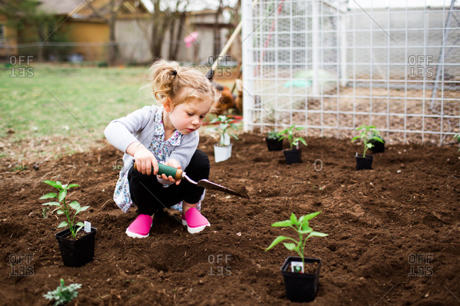 Little girl digging in garden with small shovel