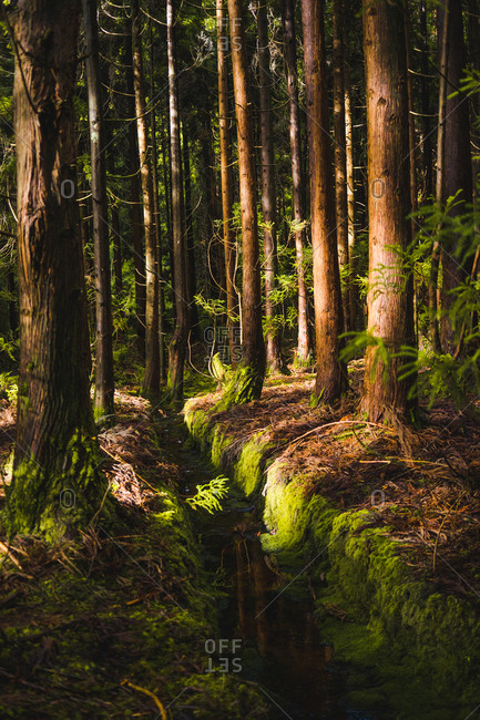 forest with trees and moss