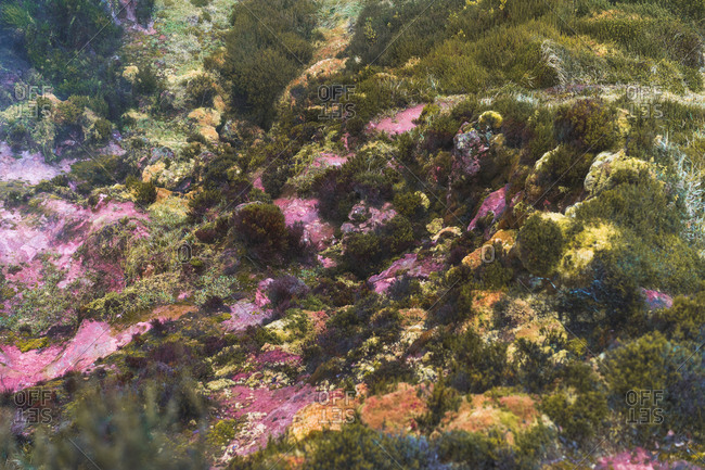 Aerial abstract view of hills and plants with pink stains.