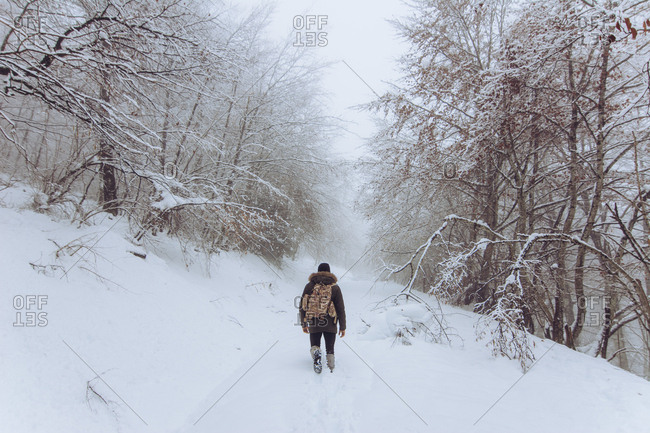 Back view of hiker with backpack walking in snowy winter forest.