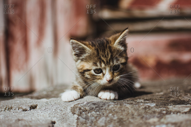 Cute little cat on the ground
