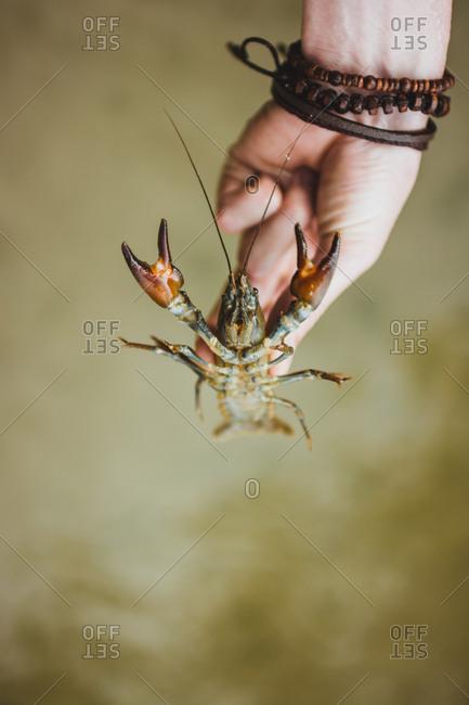 Crop hand with crayfish