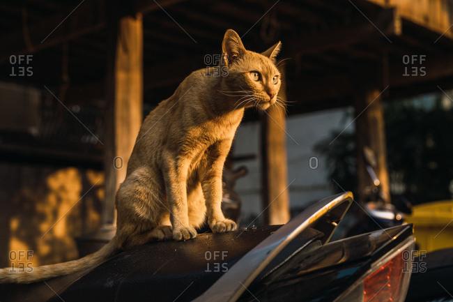 Cute pale cat on street