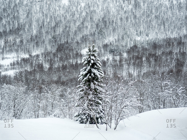 Snowy forest with bent trees