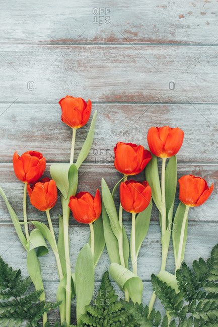 Red tulips arrangement