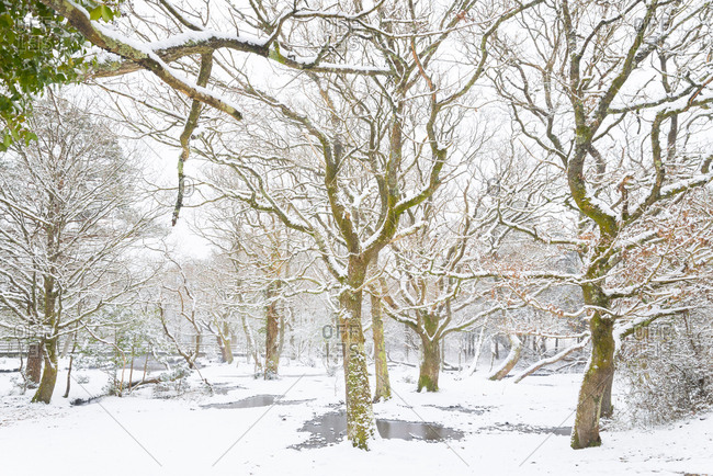 A group of snowy trees next to a frozen river in New Forest, England