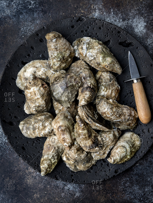Whole oysters in shell served on plate with oyster knife