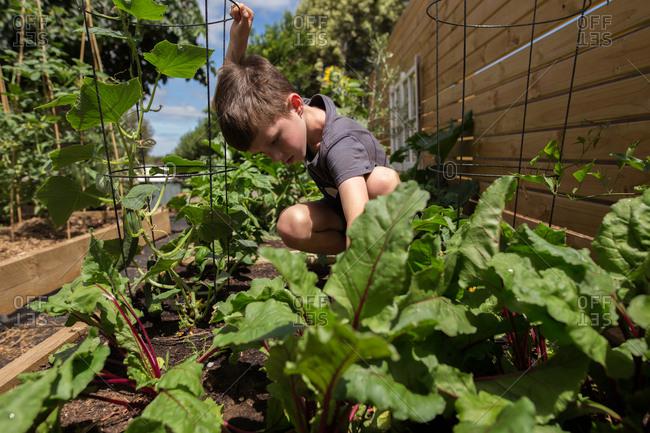 Boy working in the garden