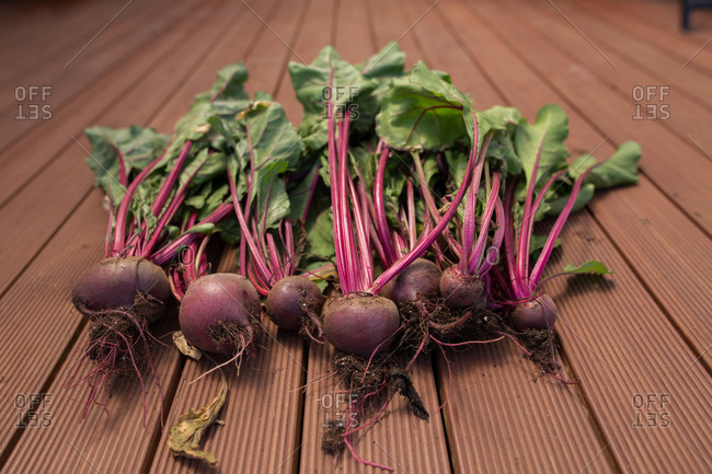 Bunch of freshly picked beets