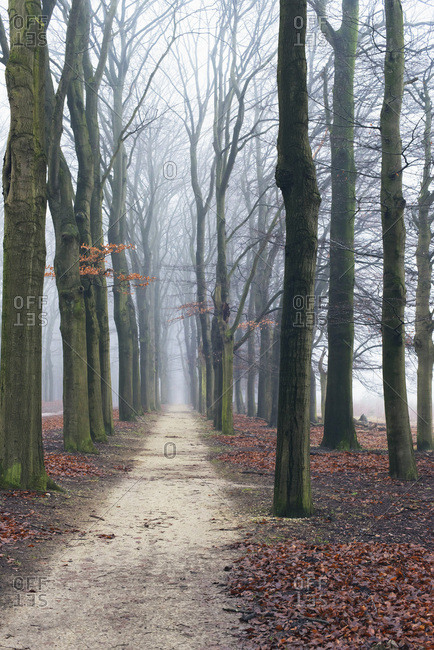Pathway in misty autumn forest