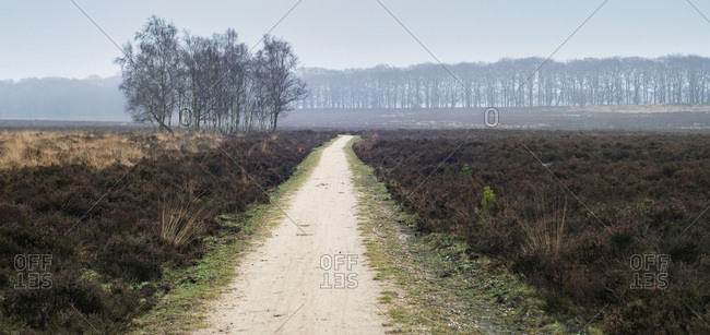Walkway in moorland with bare winter trees