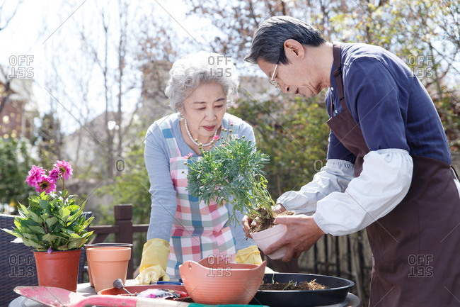 The old couple grow flowers in the yard