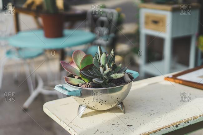 Colander used as flower pot