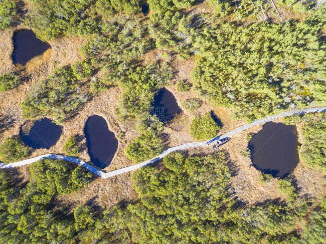 Germany- Bavaria- Lower Bavaria- Bavarian Forest National Park- Aerial view of Zwieselter Filz- raised bog- bog ponts