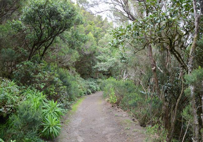 Hiking trail through a tropical rainforest