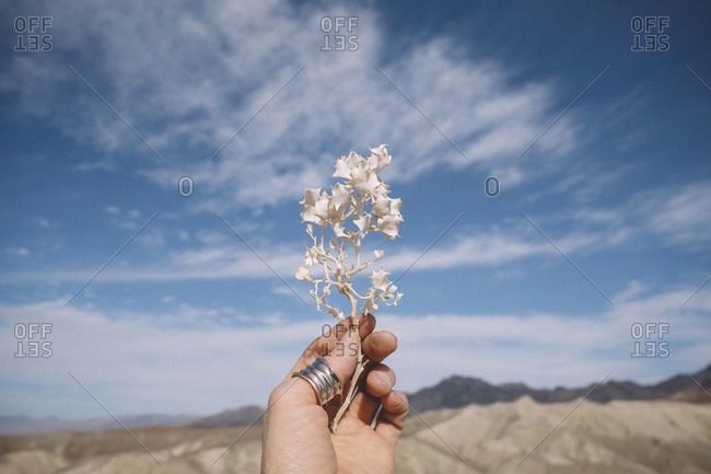 Cropped hand of woman holding white plant against mountains and cloudy sky at Death Valley National Park